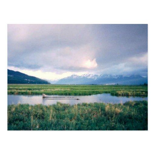 Alaska Sanctuary Postcard