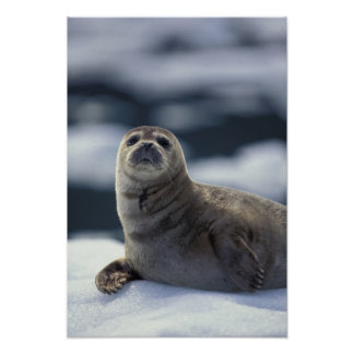 Alaska, sello de puerto suroriental de la región e póster