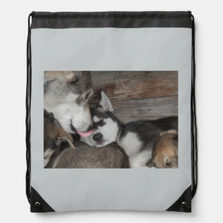 Alaska sleigh dogs backpack