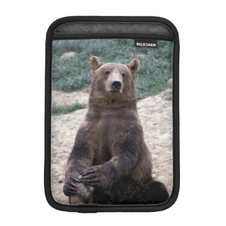 Alaska, southeast region Brown bear Ursus iPad Mini Sleeve