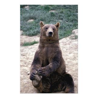 Alaska, southeast region Brown bear Ursus Art Photo