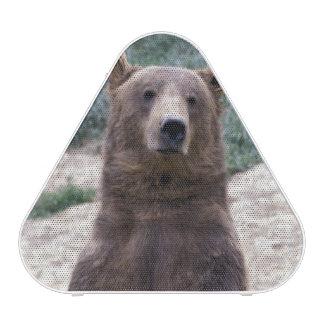 Alaska, southeast region Brown bear Ursus Speaker