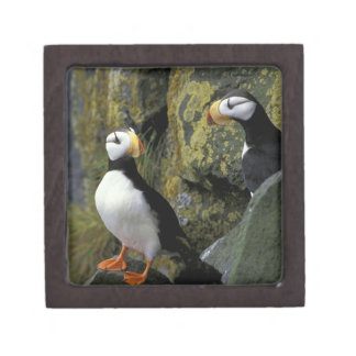 Alaska, St. Paul Island, the Pribilofs, horned Premium Trinket Boxes