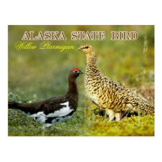 Alaska State Bird - Willow Ptarmigan Postcard