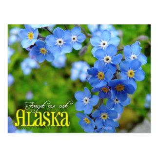 Alaska State Flower: Forget-me-not Postcard