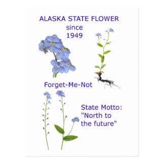 Alaska State Flower Postcard
