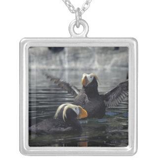 Alaska Tufted puffins Jewelry
