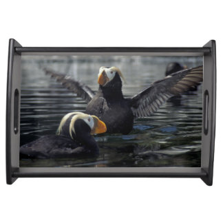 Alaska Tufted puffins Serving Tray