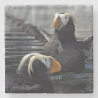 Alaska Tufted puffins Stone Coaster