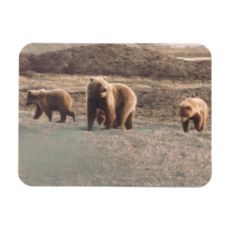 Alaska Tundra Grizzly Sow and Cubs Refrigerator Magnet