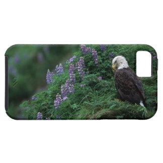 Alaska, Unalaska Island Bald Eagle among Nootka iPhone SE/5/5s Case