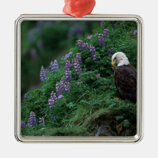 Alaska, Unalaska Island Bald Eagle among Nootka Metal Ornament