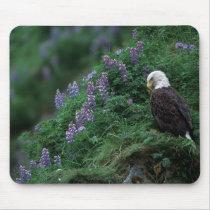 Alaska, Unalaska Island Bald Eagle among Nootka Mouse Pad
