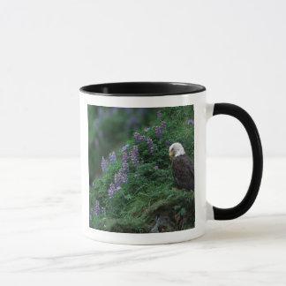 Alaska, Unalaska Island Bald Eagle among Nootka Mug