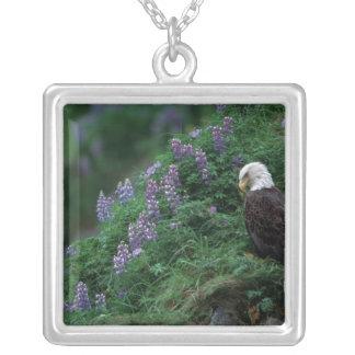 Alaska, Unalaska Island Bald Eagle among Nootka Silver Plated Necklace