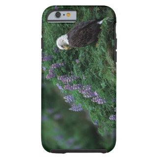 Alaska, Unalaska Island Bald Eagle among Nootka Tough iPhone 6 Case