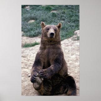 Alaska, Ursus suroriental del oso de Brown de la r Póster