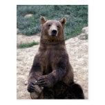 Alaska, Ursus suroriental del oso de Brown de la r Postales