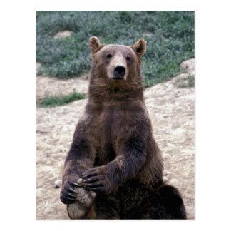 Alaska, Ursus suroriental del oso de Brown de la Postal