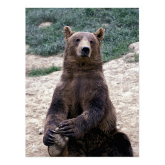 Alaska, Ursus suroriental del oso de Brown de la Tarjetas Postales