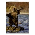 Alaska, USA, Grizzly Bear, Ursus arctos, cub Cards