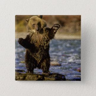 Alaska, USA, Grizzly Bear, Ursus arctos, cub Pinback Button