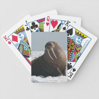 Alaska Walrus Cow Cards