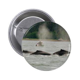 Alaska Whales Pins