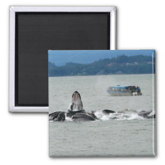 Alaska Whales Fridge Magnets