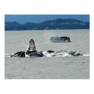 Alaska Whales Post Card