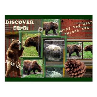Alaska-Where The Wild Things Are Postcard