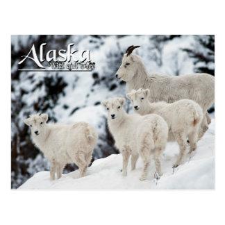 Alaska Wild and Free Postcard