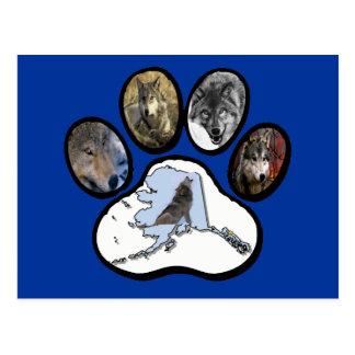 Alaska Wolf Paw Postcard