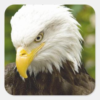 Alaskan Bald Eagle Square Sticker