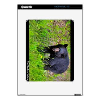 Alaskan Black Bear Decals For iPad