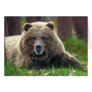 Alaskan Brown Bear at Kenai NWR in Alaska. Card