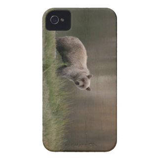 Alaskan Brown Bear Case-Mate iPhone 4 Case