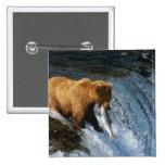 Alaskan Brown Bear Catching Salmon at Brooks Buttons