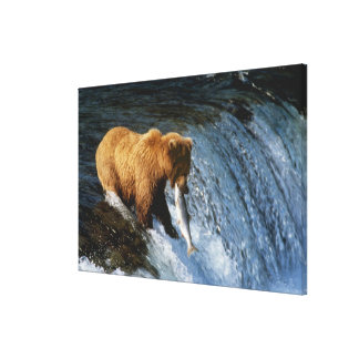 Alaskan Brown Bear Catching Salmon at Brooks Gallery Wrapped Canvas