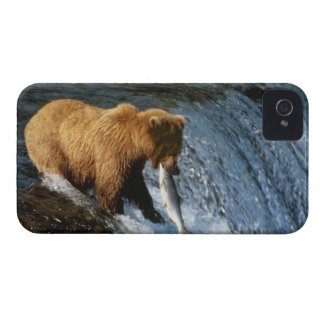Alaskan Brown Bear Catching Salmon at Brooks iPhone 4 Covers
