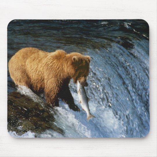 Alaskan Brown Bear Catching Salmon at Brooks Mouse Pad