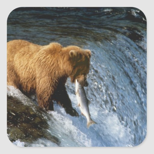 Alaskan Brown Bear Catching Salmon at Brooks Stickers