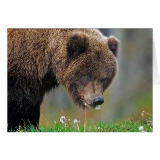Alaskan Brown Bear Eating Dandelion Card
