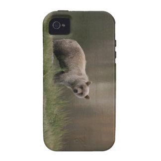 Alaskan Brown Bear iPhone 4 Case