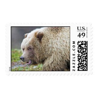 Alaskan Brown Bear Postage