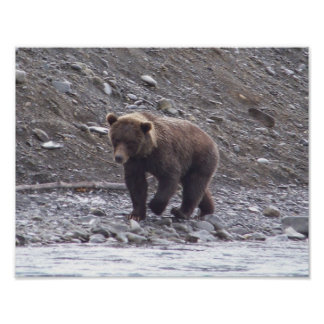 Alaskan Brown Bear Poster Print