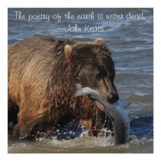 Alaskan Brown Bear poster with Keats quote