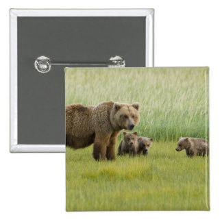 Alaskan Brown Bear Sow and three Cubs, Ursus 2 Inch Square Button
