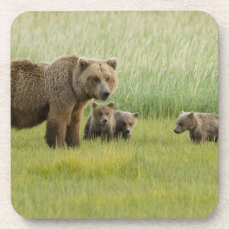 Alaskan Brown Bear Sow and three Cubs, Ursus Coaster