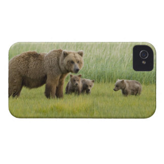 Alaskan Brown Bear Sow and three Cubs, Ursus iPhone 4 Case